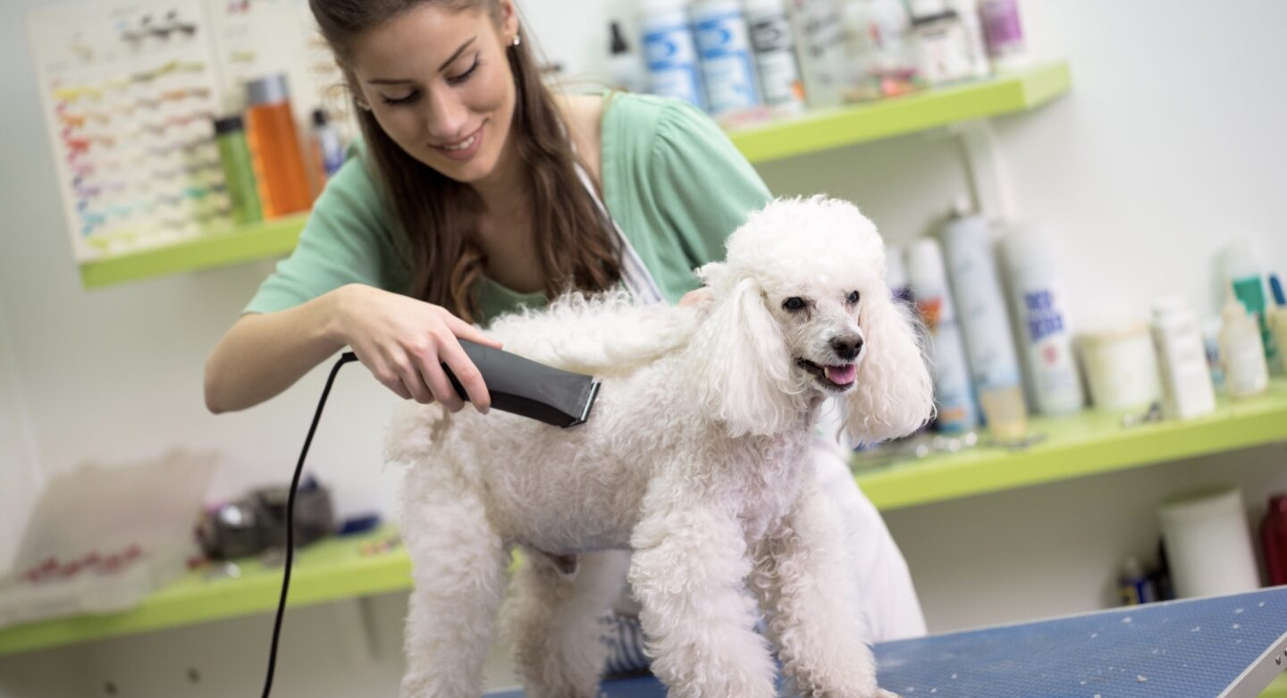 Work From Home Animal Jobs that are Flexible Enough For Mums