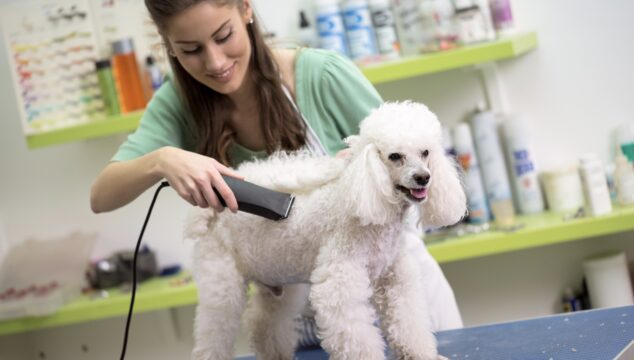 Home based dog groomer