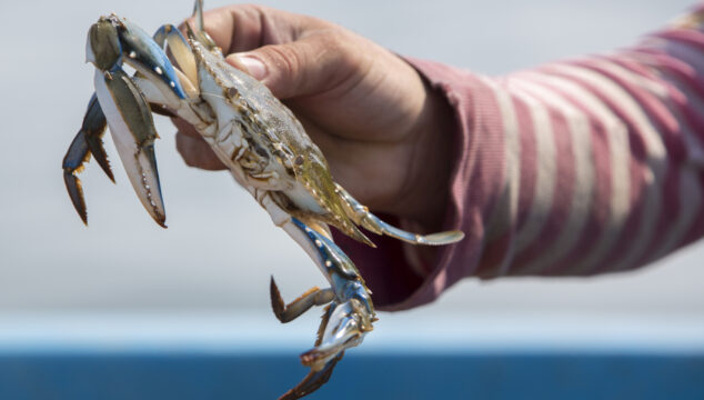 Child's hand hold a crab