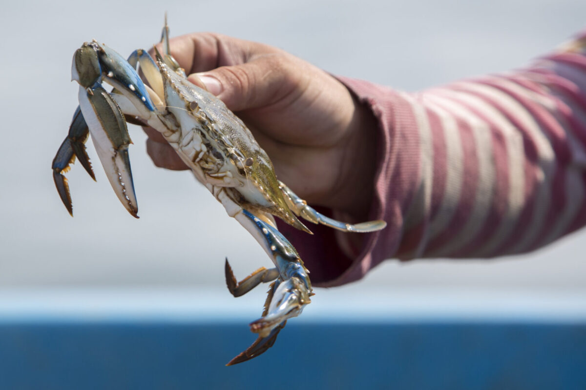 Crabbing with Kids – How to Do It and the Best Places to Go Crabbing