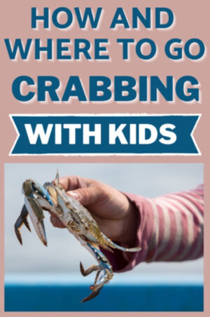 How and where to go crabbing and with kids